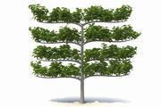 Dekoratif şube ağacı 3d model