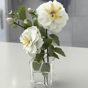 하얀 장미 3d model