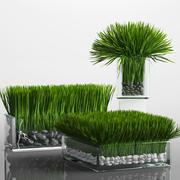 Grass Arrangement 3d model