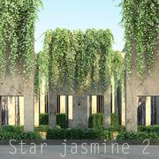 Star jasmine 2 3d model
