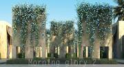 Morning glory 2 3d model