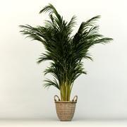 Dypsis tree 3d model