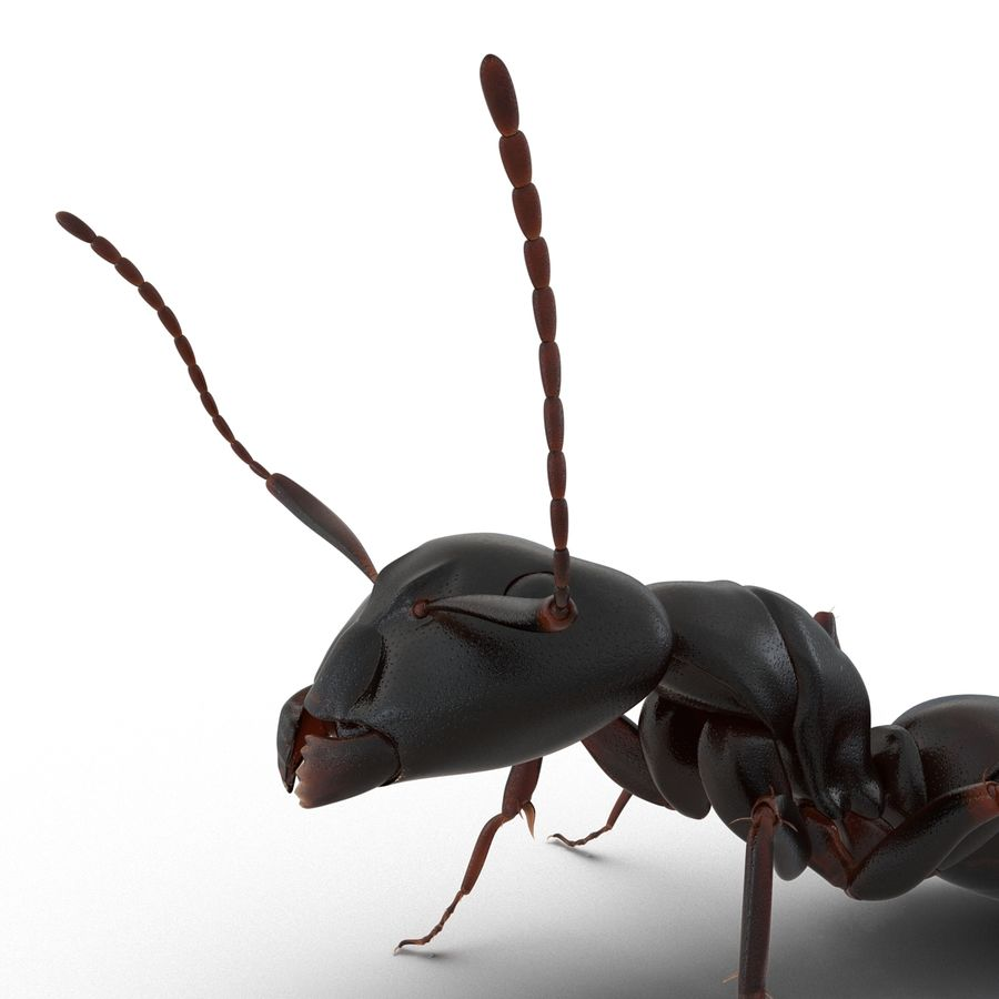 Insects 3D Models Collection royalty-free 3d model - Preview no. 18