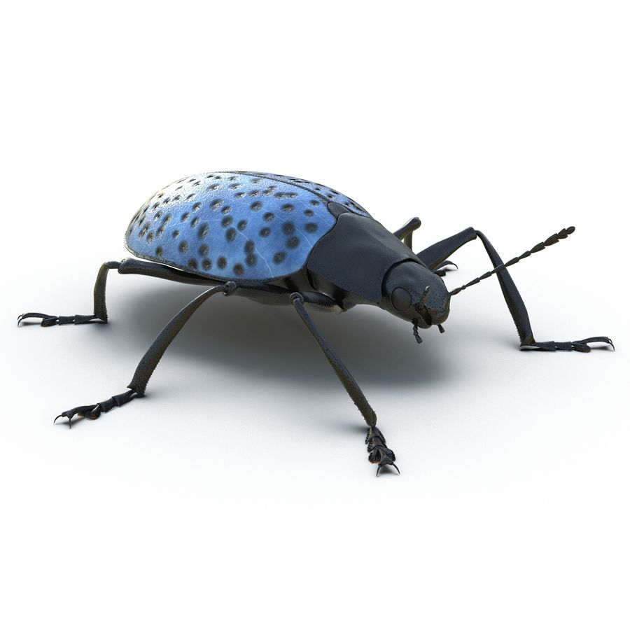 Insects 3D Models Collection royalty-free 3d model - Preview no. 20