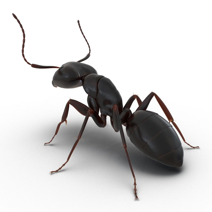 Insects 3D Models Collection royalty-free 3d model - Preview no. 12