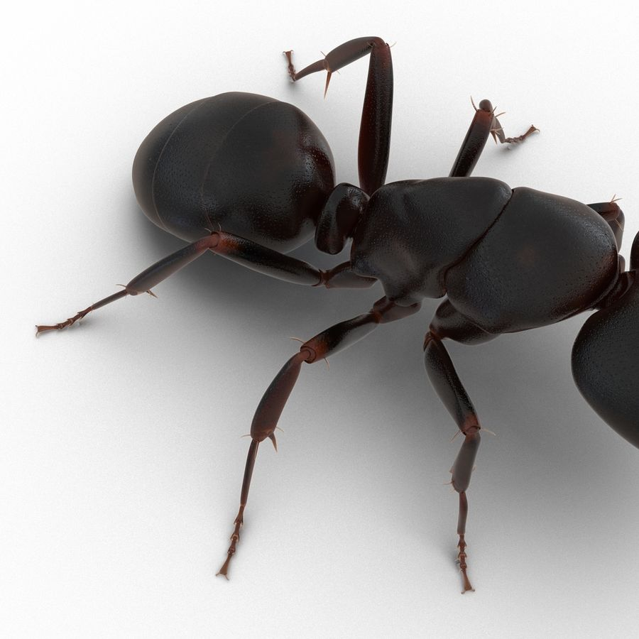 Insects 3D Models Collection royalty-free 3d model - Preview no. 17