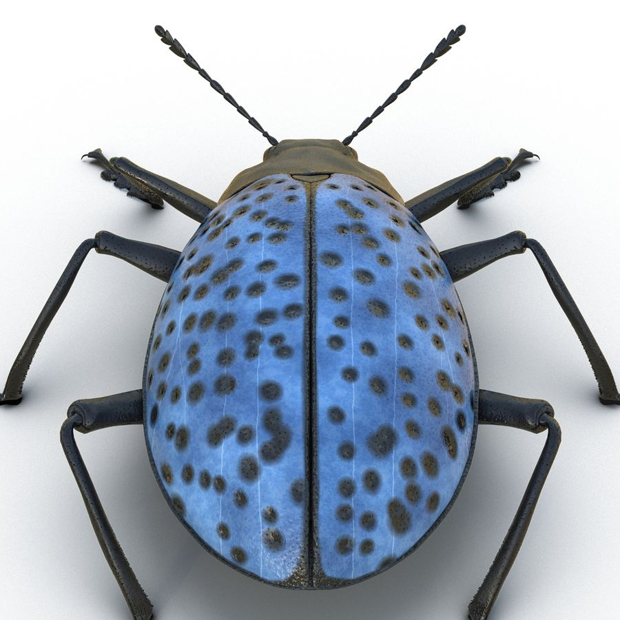 Insects 3D Models Collection royalty-free 3d model - Preview no. 26