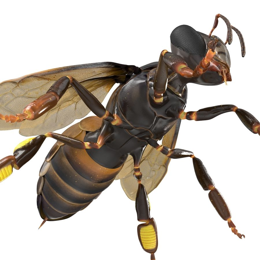 Insects 3D Models Collection royalty-free 3d model - Preview no. 41