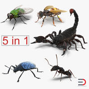 Insects 3D Models Collection 3d model