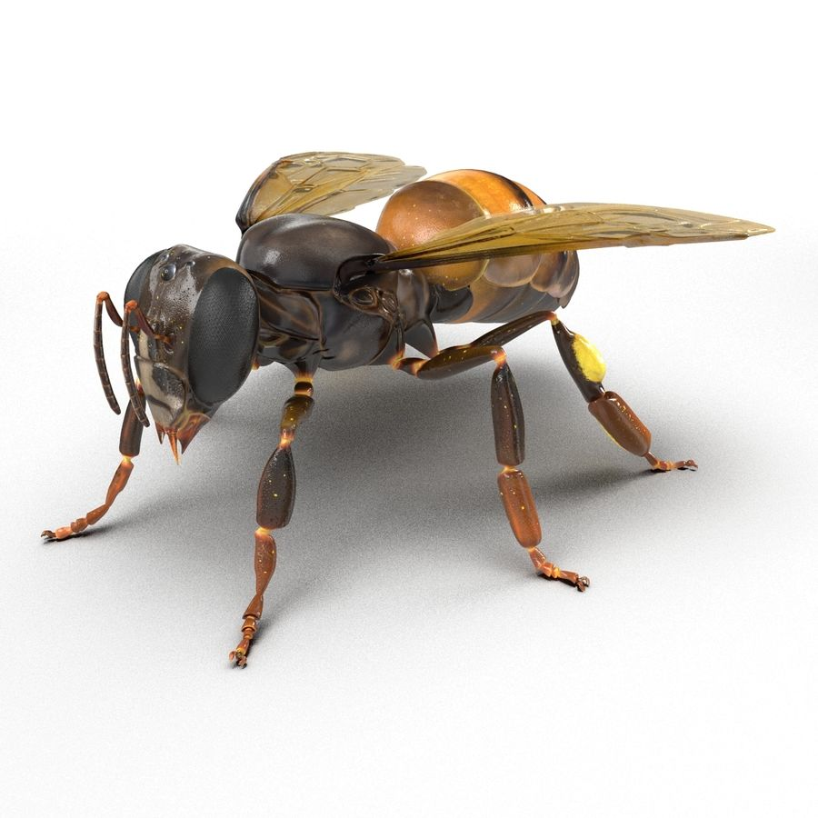 Insects 3D Models Collection royalty-free 3d model - Preview no. 36