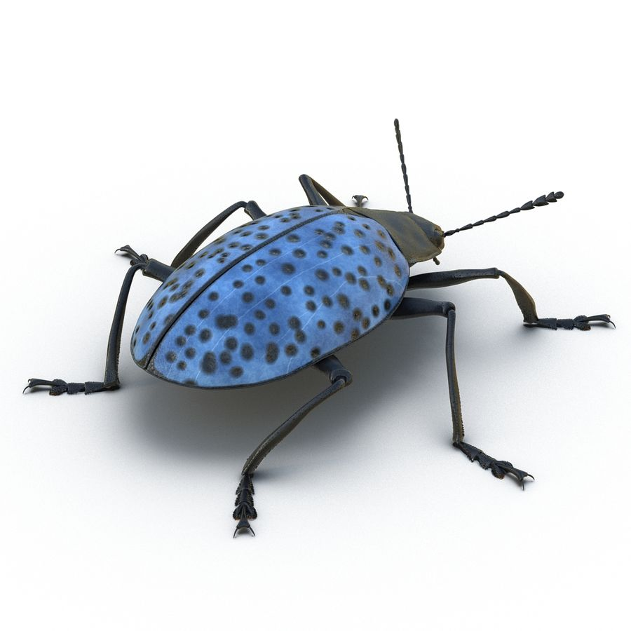 Insects 3D Models Collection royalty-free 3d model - Preview no. 22