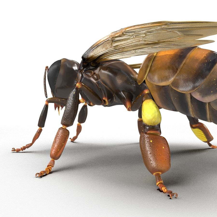 Insects 3D Models Collection royalty-free 3d model - Preview no. 42