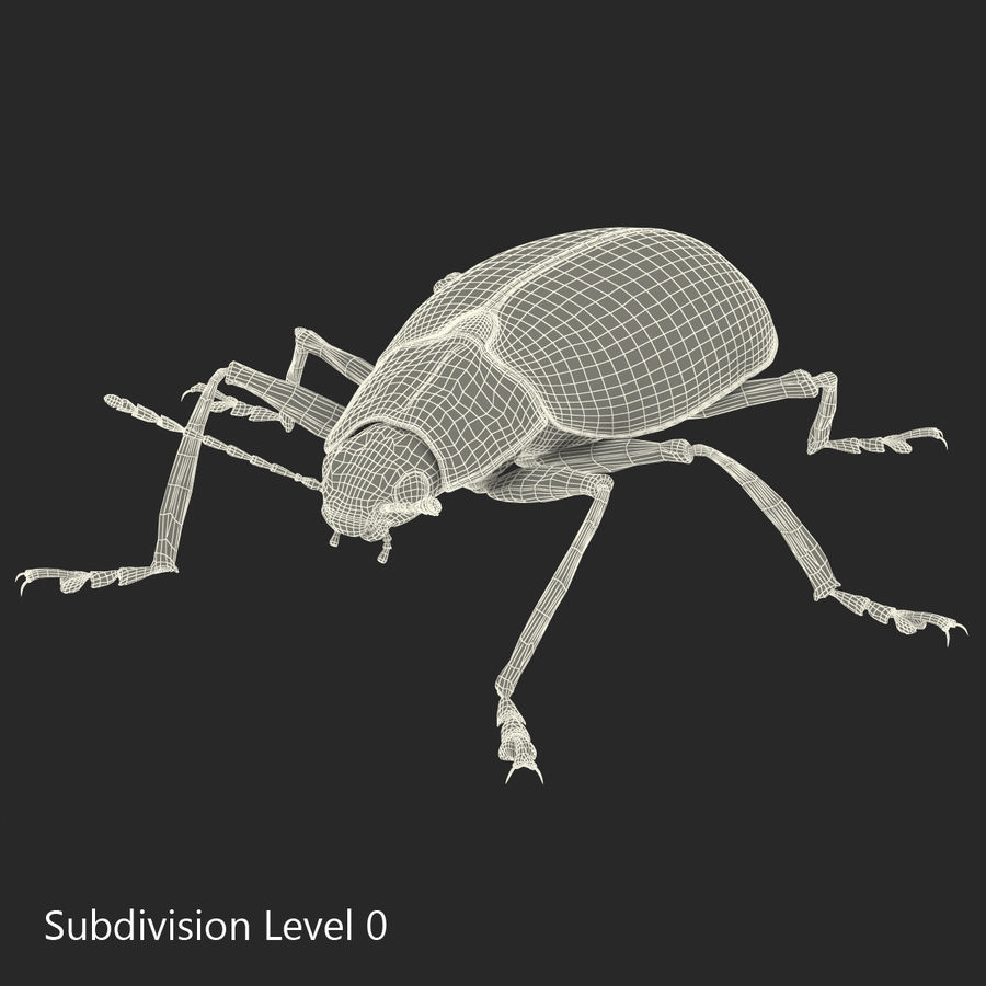 Insects 3D Models Collection royalty-free 3d model - Preview no. 49