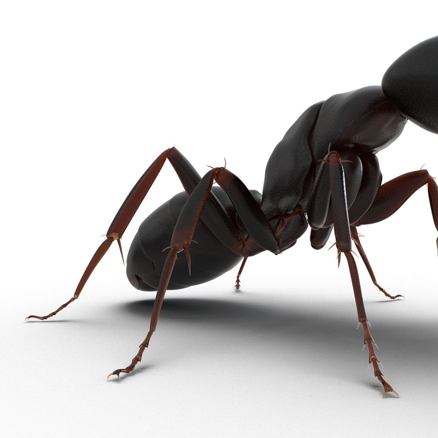 Insects 3D Models Collection royalty-free 3d model - Preview no. 19