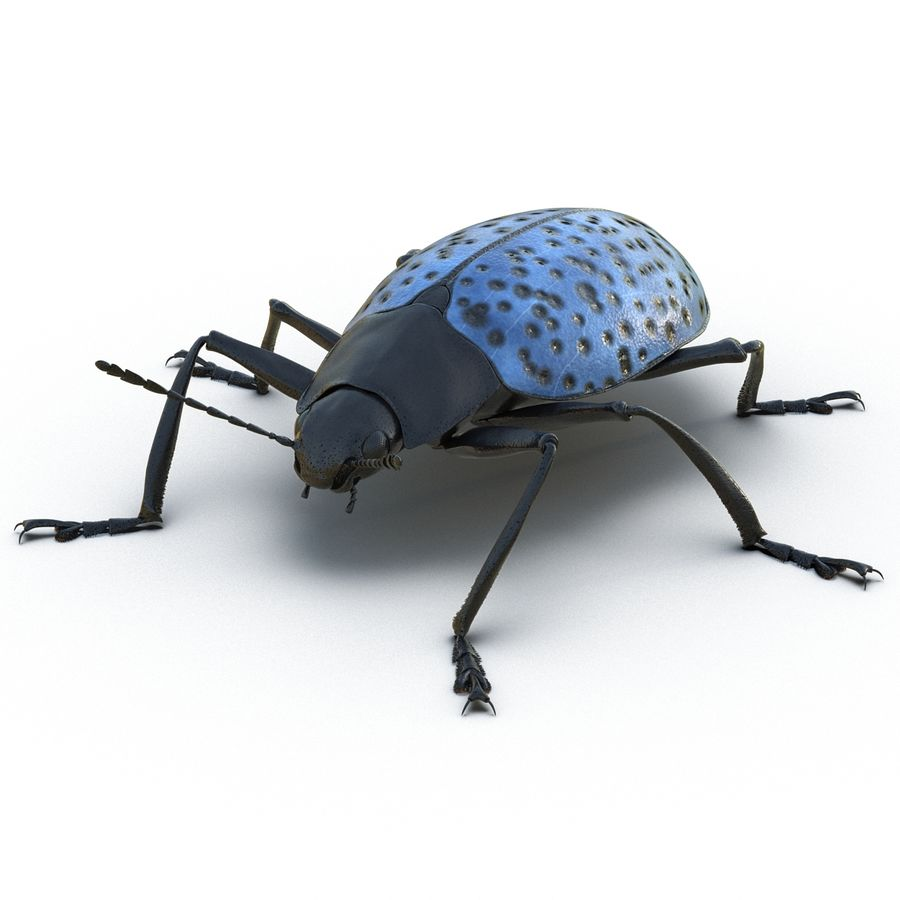 Insects 3D Models Collection royalty-free 3d model - Preview no. 21