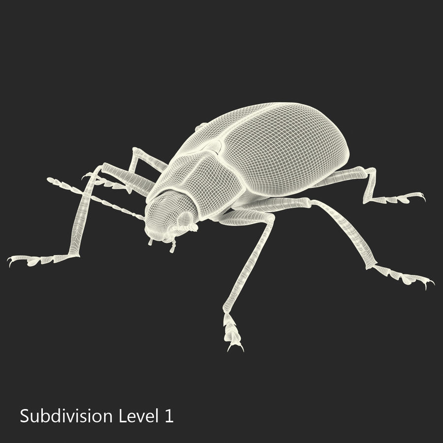 Insects 3D Models Collection royalty-free 3d model - Preview no. 50