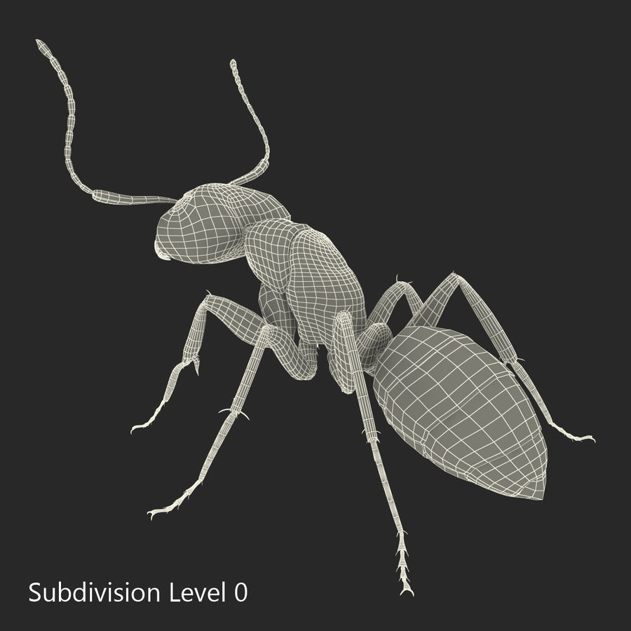 Insects 3D Models Collection royalty-free 3d model - Preview no. 45