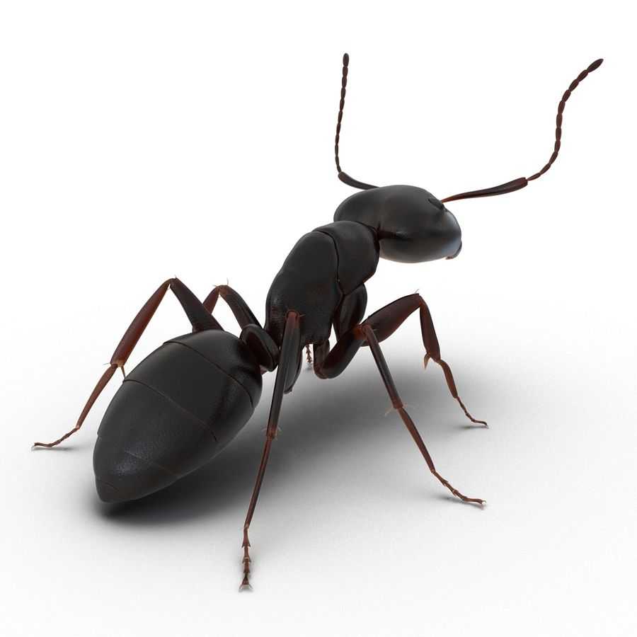 Insects 3D Models Collection royalty-free 3d model - Preview no. 13