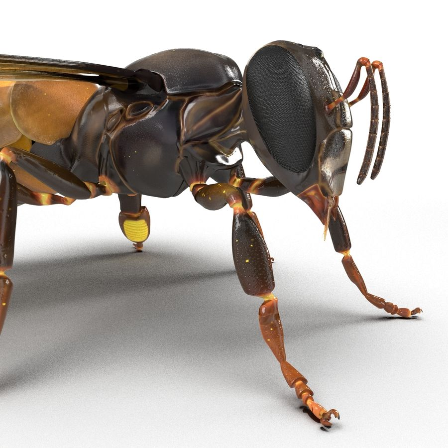 Insects 3D Models Collection royalty-free 3d model - Preview no. 44