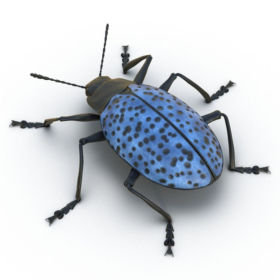 Insects 3D Models Collection royalty-free 3d model - Preview no. 23