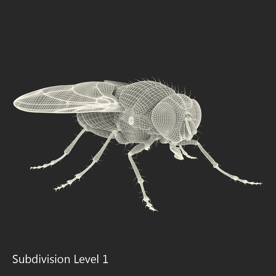 Insects 3D Models Collection royalty-free 3d model - Preview no. 52