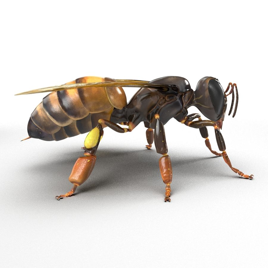 Insects 3D Models Collection royalty-free 3d model - Preview no. 37