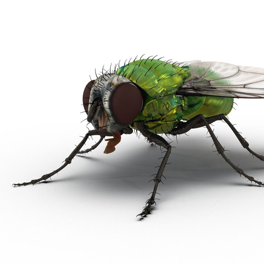 Insects 3D Models Collection royalty-free 3d model - Preview no. 32