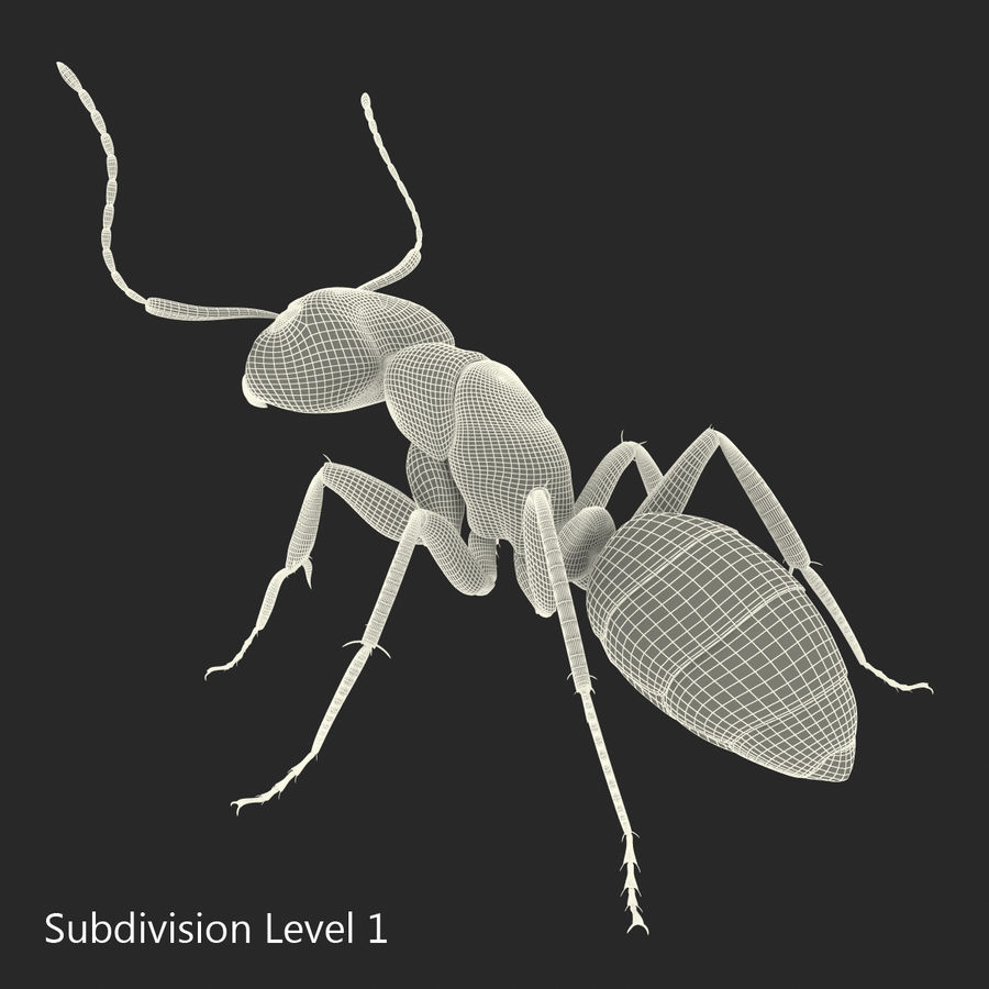 Insects 3D Models Collection royalty-free 3d model - Preview no. 46