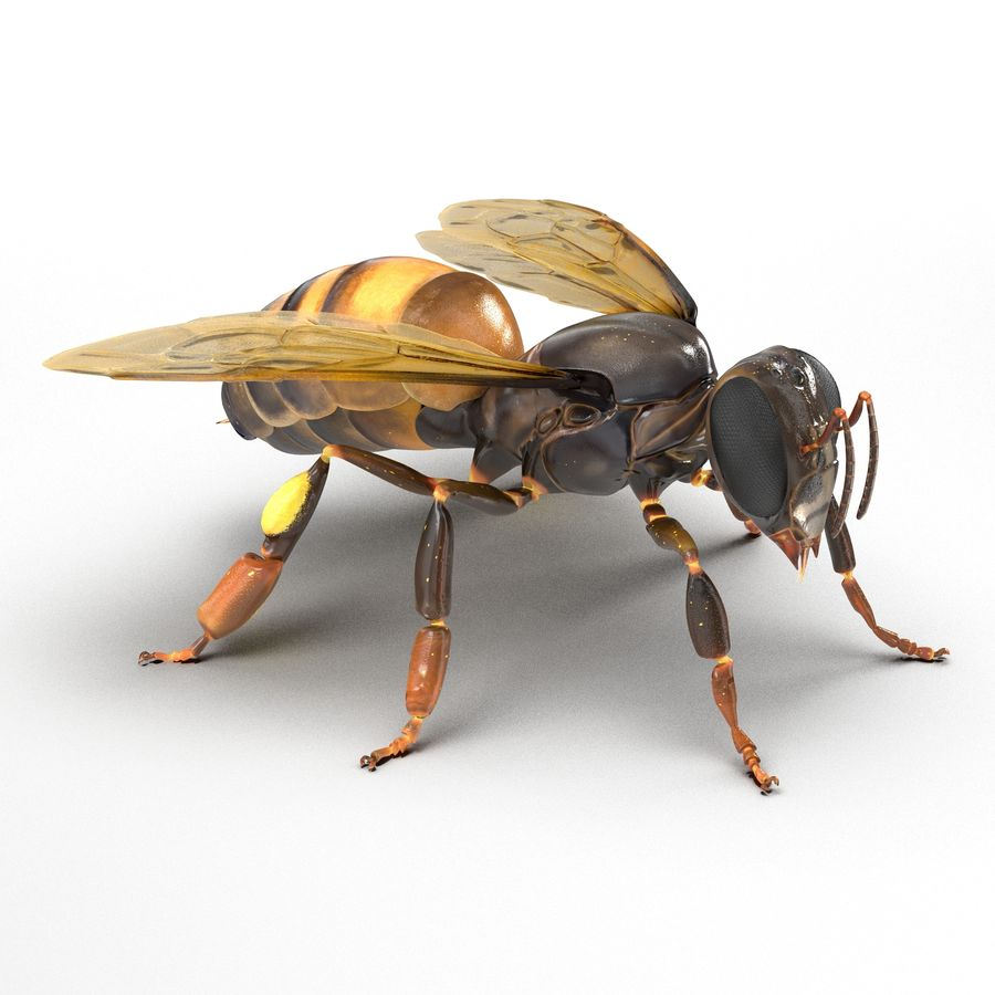 Insects 3D Models Collection royalty-free 3d model - Preview no. 35