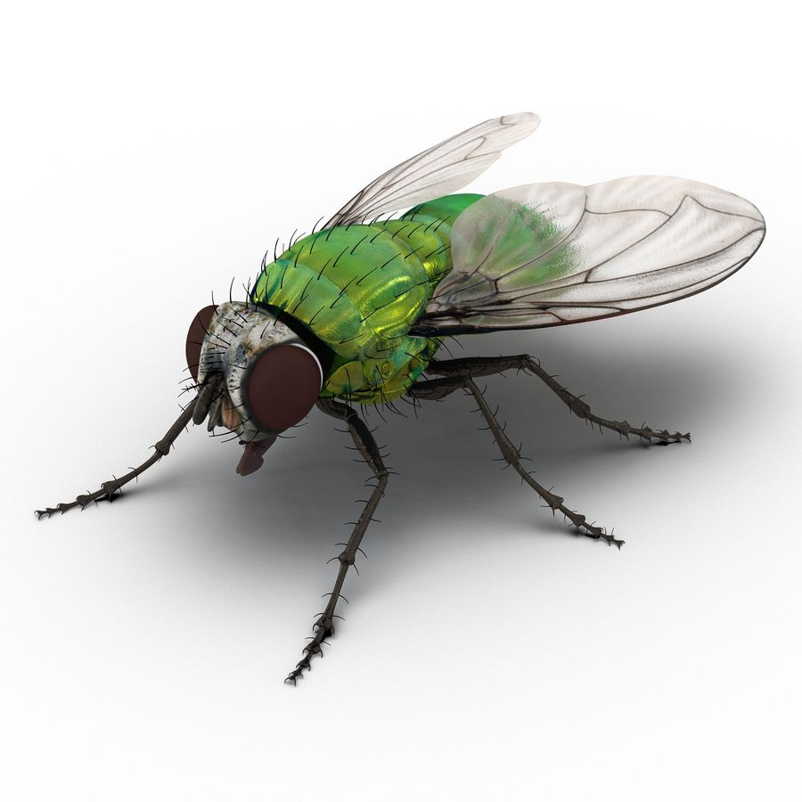 Insects 3D Models Collection royalty-free 3d model - Preview no. 27