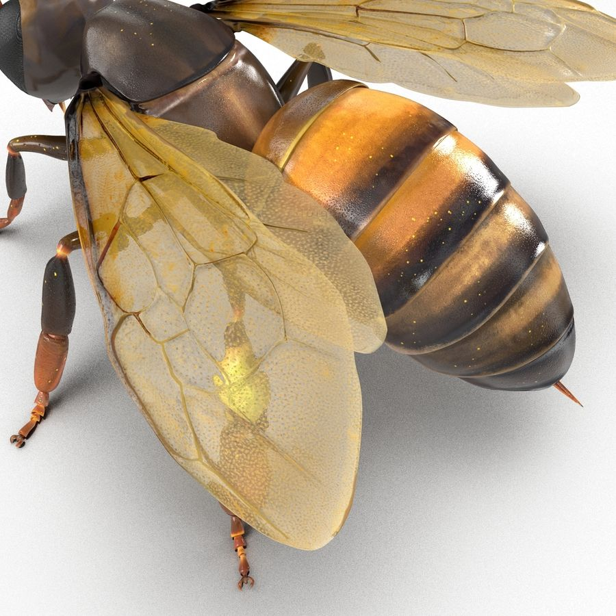 Insects 3D Models Collection royalty-free 3d model - Preview no. 43