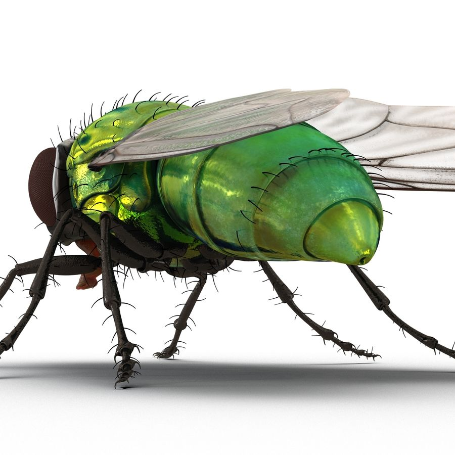 Insects 3D Models Collection royalty-free 3d model - Preview no. 33