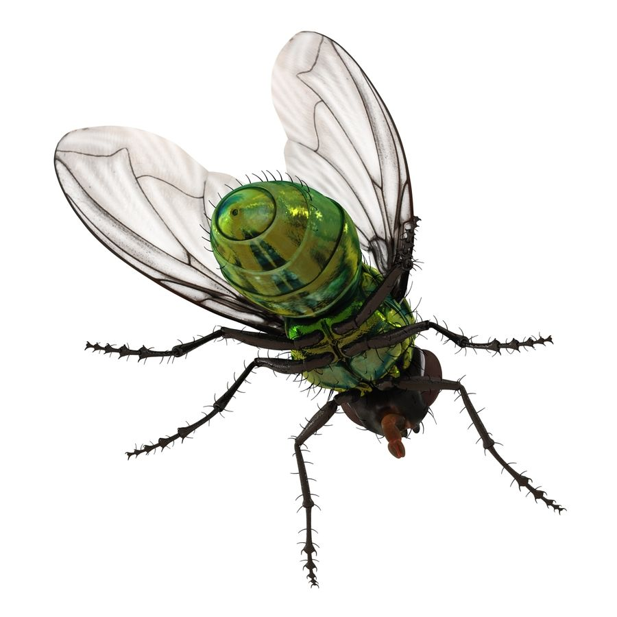 Insects 3D Models Collection royalty-free 3d model - Preview no. 31