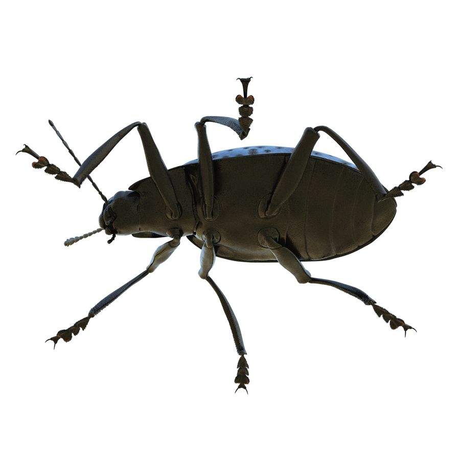 Insects 3D Models Collection royalty-free 3d model - Preview no. 24