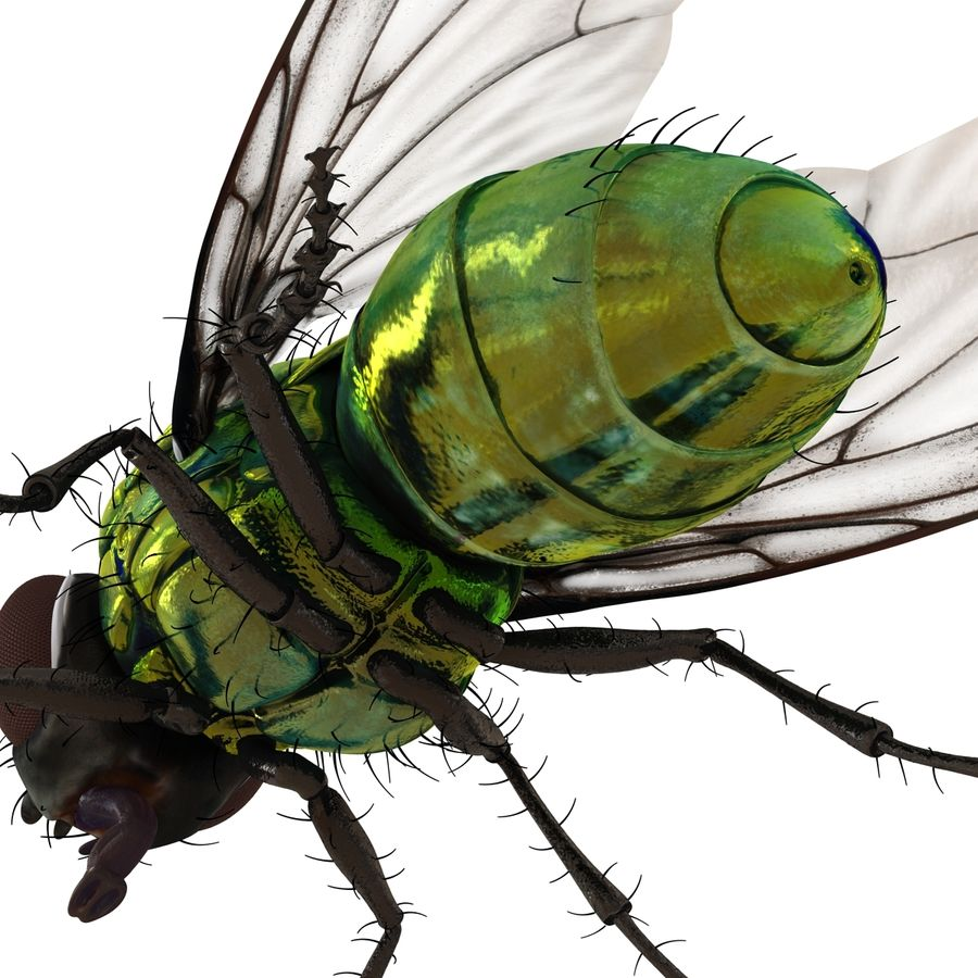 Insects 3D Models Collection royalty-free 3d model - Preview no. 34