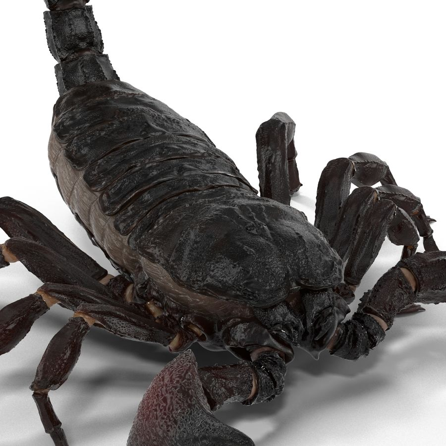 Insects 3D Models Collection royalty-free 3d model - Preview no. 9