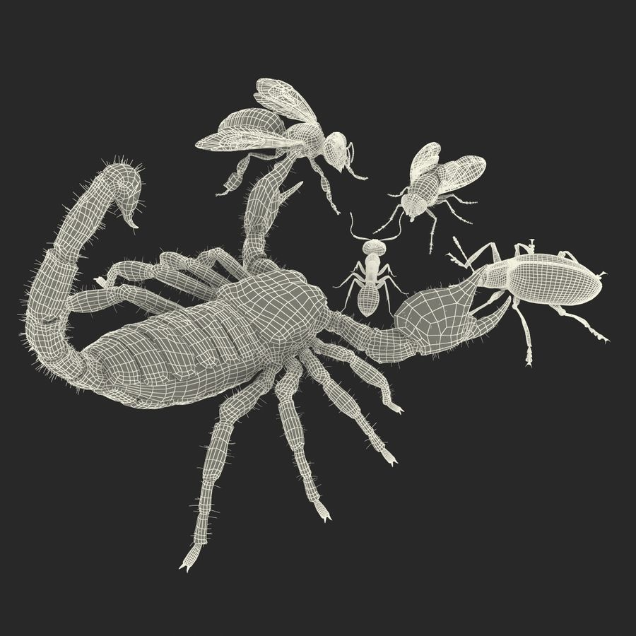 Insects 3D Models Collection royalty-free 3d model - Preview no. 60