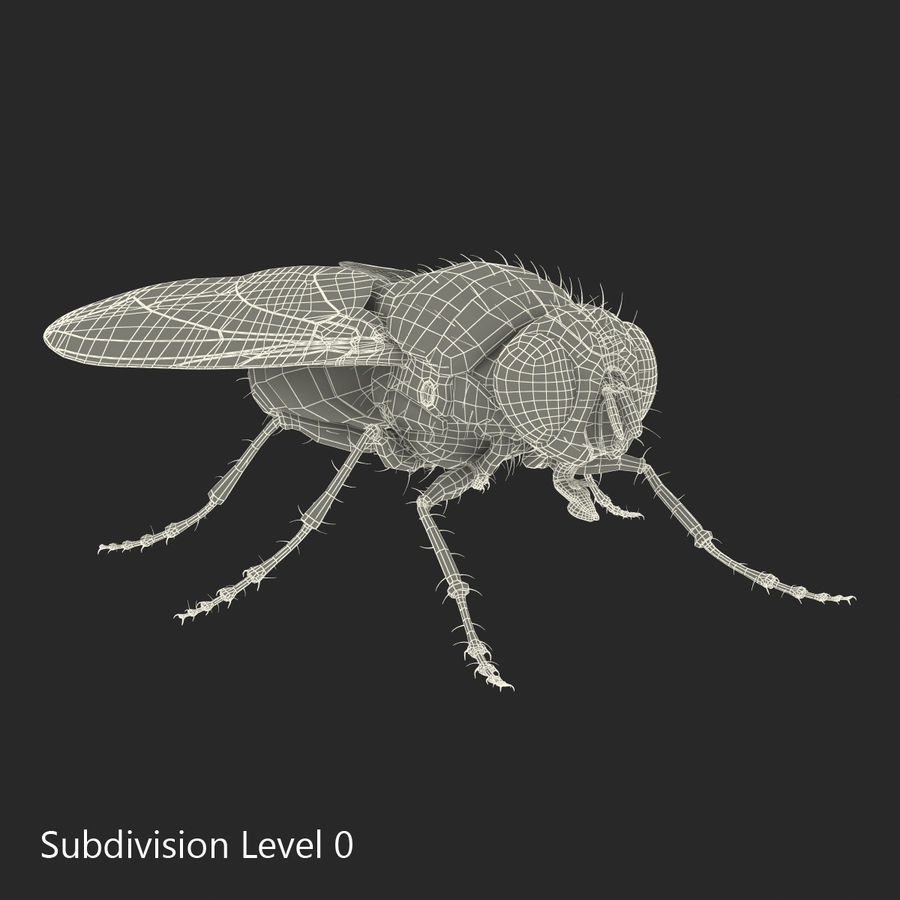 Insects 3D Models Collection royalty-free 3d model - Preview no. 51