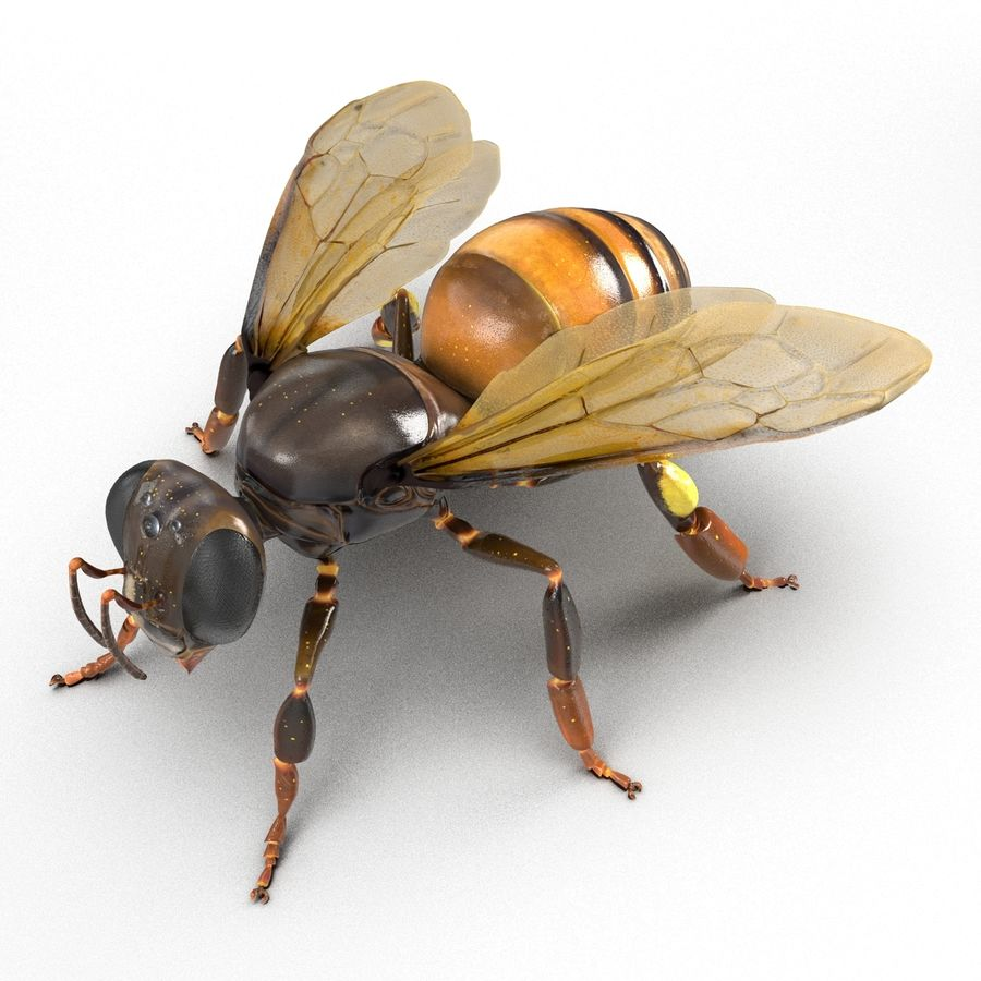 Insects 3D Models Collection royalty-free 3d model - Preview no. 38