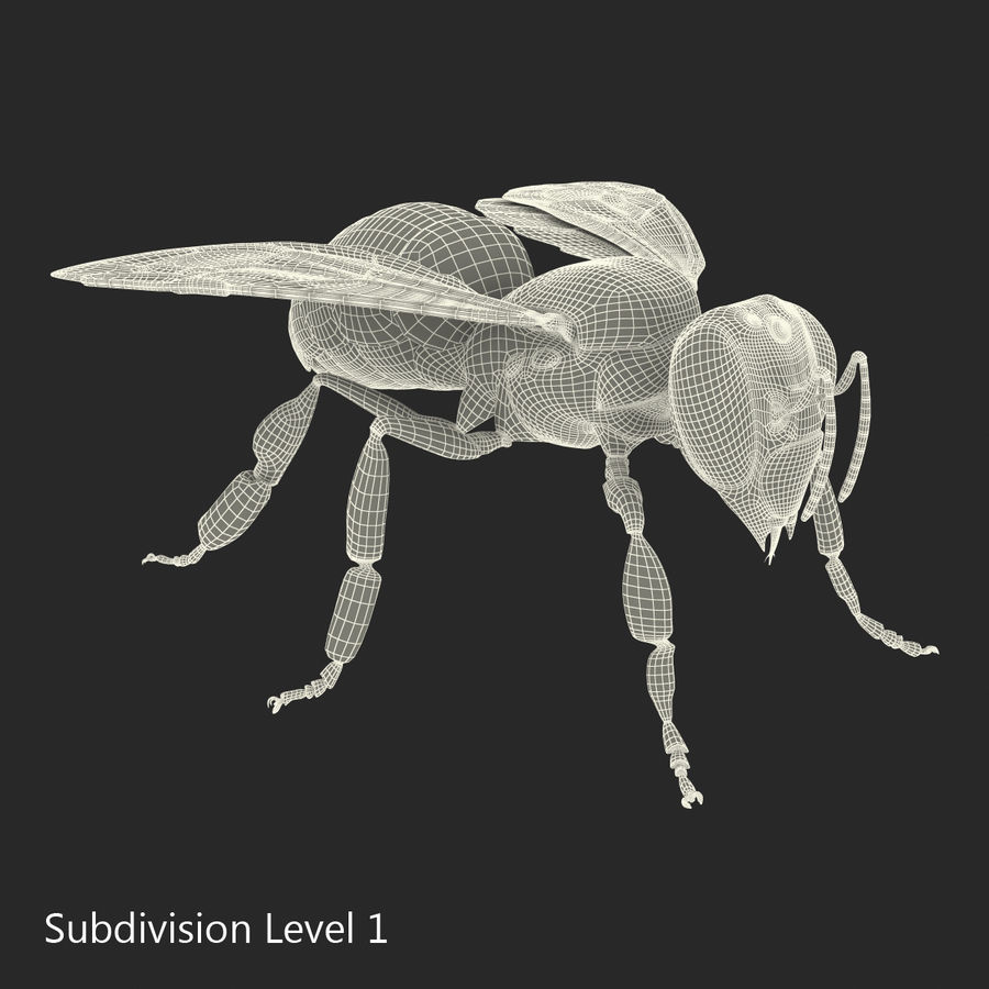 Insects 3D Models Collection royalty-free 3d model - Preview no. 54