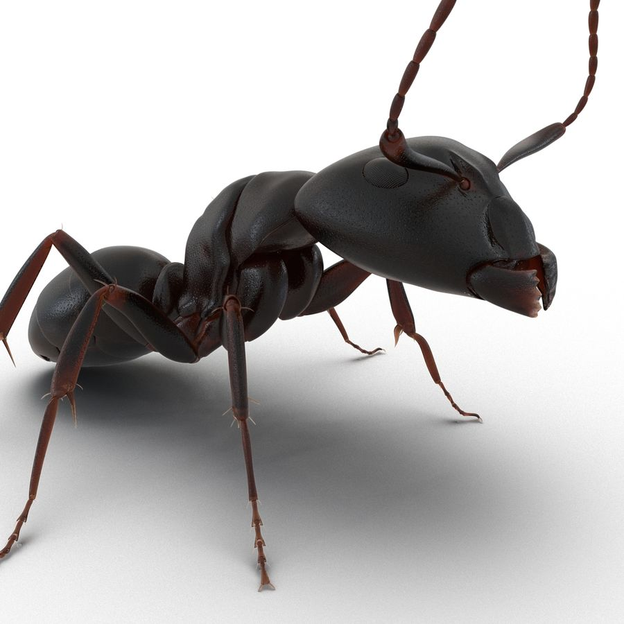 Insects 3D Models Collection royalty-free 3d model - Preview no. 16