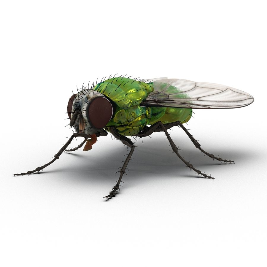Insects 3D Models Collection royalty-free 3d model - Preview no. 28