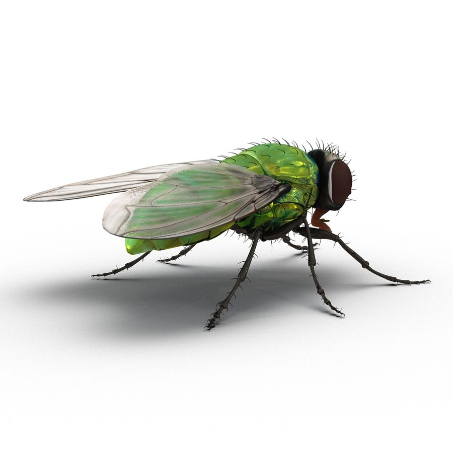 Insects 3D Models Collection royalty-free 3d model - Preview no. 29