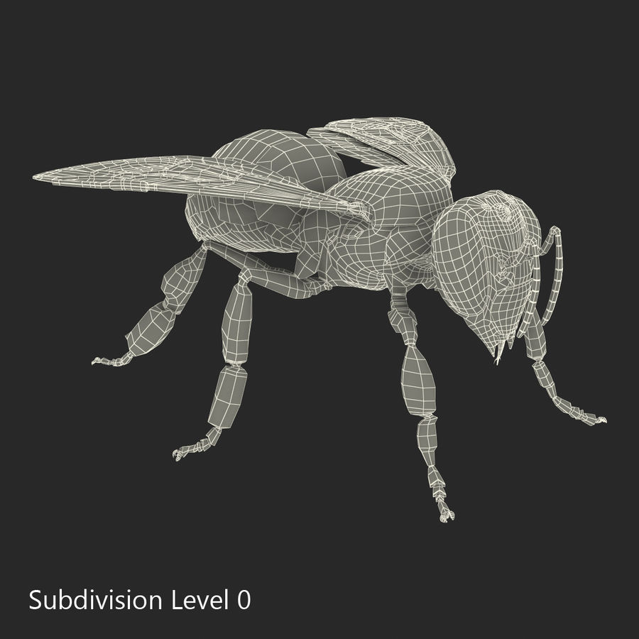 Insects 3D Models Collection royalty-free 3d model - Preview no. 53