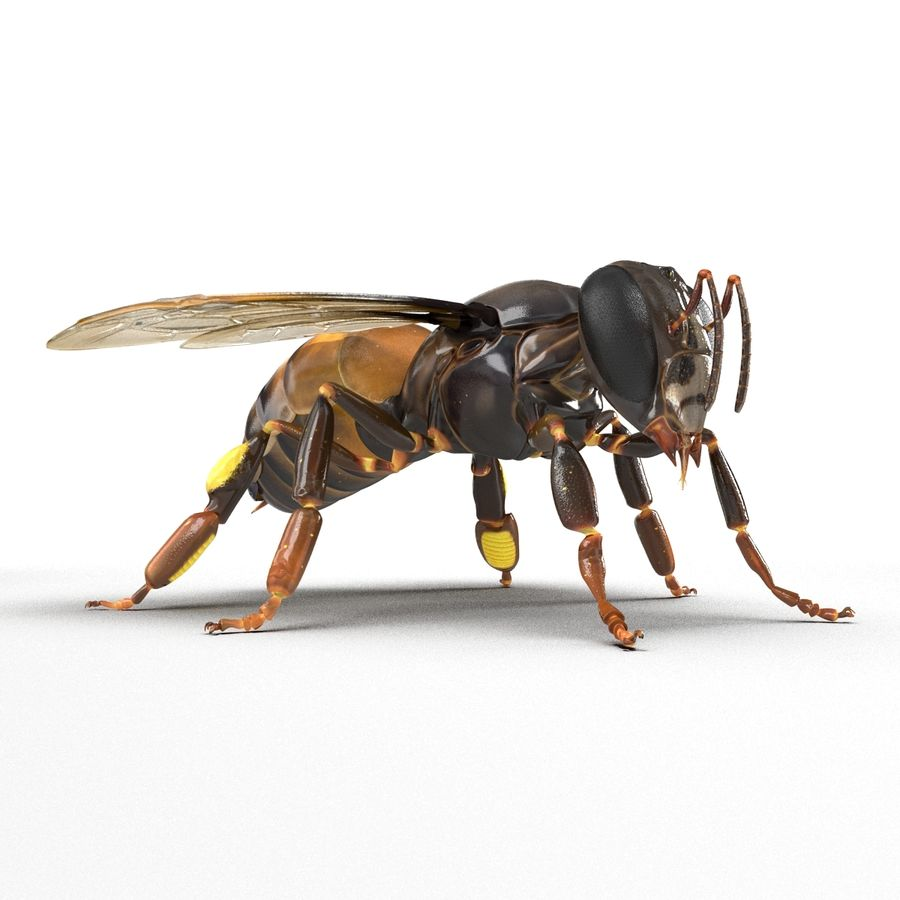Insects 3D Models Collection royalty-free 3d model - Preview no. 39
