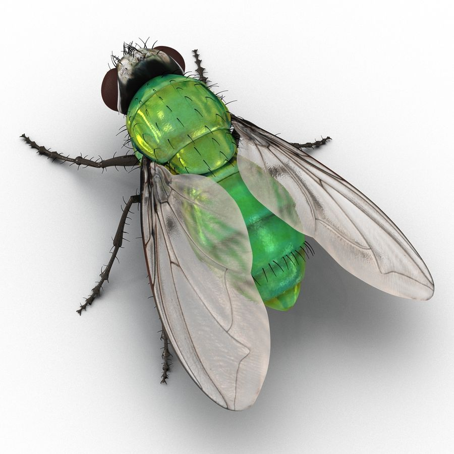 Insects 3D Models Collection royalty-free 3d model - Preview no. 30