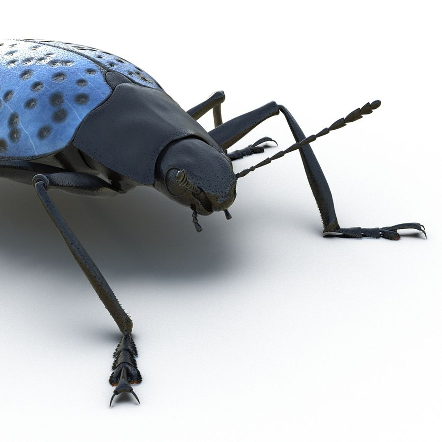 Insects 3D Models Collection royalty-free 3d model - Preview no. 25