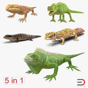 Lizards Collection 3d model
