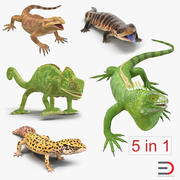 Rigged Lizards 3D Models Collection 3d model