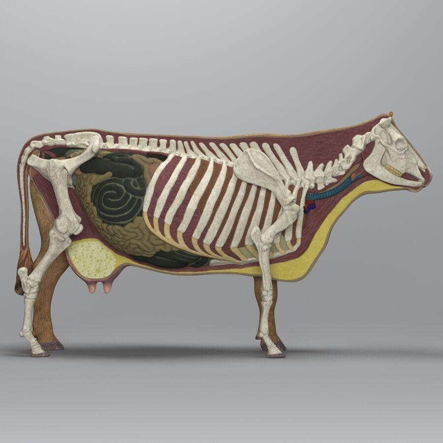 Anatomie de la vache royalty-free 3d model - Preview no. 4